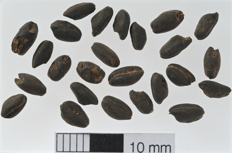 Stone Age Farmers Showed Sophisticated Use of Fertilizers | Aux origines | Scoop.it