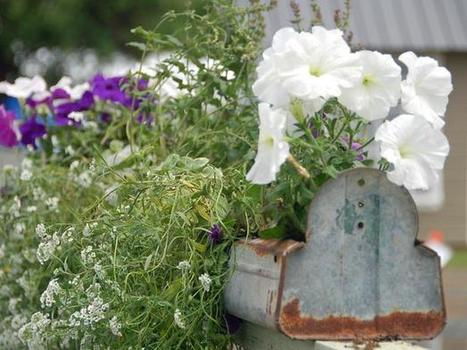 Rail and gutter garden | Upcycled Garden Style | Scoop.it