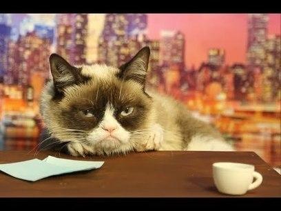 Watch Grumpy Cat Audition For David Letterman's Job (Video) - Business 2 Community | Digital-News on Scoop.it today | Scoop.it