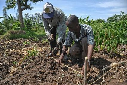 How do you assess climate change adaptation options for farmers? Lessons from AgMIP | CGIAR Climate | adapting to climate change | Scoop.it