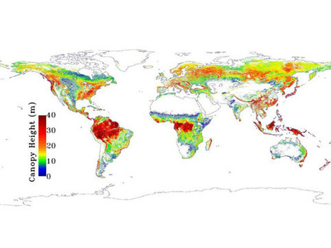 NASA map reveals the heights of the world's forests - Mongabay.com | Geography | Scoop.it