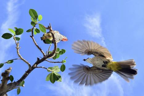Awe-inspiring nature shots as Society of Biology unveils shortlist for amateur ... - The Independent | Biology | Scoop.it