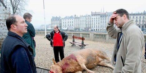 Scandale de la vache folle : vers un non-lieu ? | Agriculture en Dordogne | Scoop.it