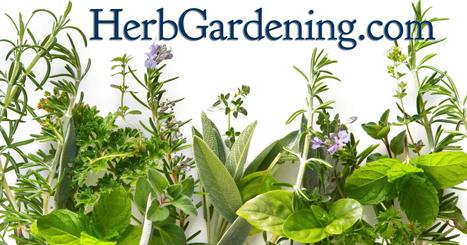 Herb Gardens | How To Grow Herbs Indoors and Out | Annie Haven | Haven Brand | Scoop.it