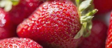 Les fraises françaises et espagnoles malades de leurs pesticides | Les filières bio | Scoop.it