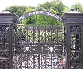 The Dark Art of……. Poison | History Curiosity | Scoop.it