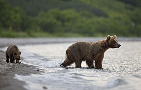 Les animaux ont souffert de la chute de l'Union soviétique   Ces animaux sauvages ou domestiques maltraités par l'homme   Scoop.it