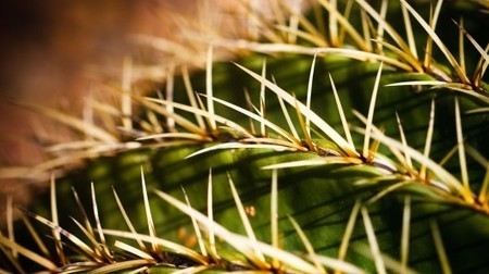Oil spill-absorbing material inspired by cactus needles | GizMag.com | SecureOil | Scoop.it