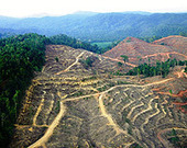 China's Appetite for Wood Takes a Heavy Toll on Forests | Biodiversity IS Life  – #Conservation #Ecosystems #Wildlife #Rivers #Forests #Environment | Scoop.it