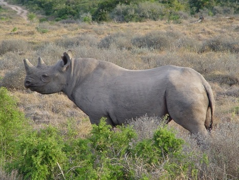 Keep a watch on the rhinos | Worldwide Experience | AnimalConservation | Scoop.it