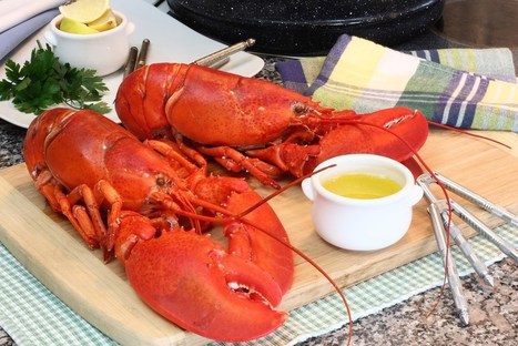 How Maine's Lobster Industry Is A Model Of Sustainable Seafood | Aquaculture Directory | Scoop.it