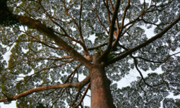 Researchers Find Trees in Borneo Soak Up More CO2 Than Trees in the Amazon Rainforest | EcoWatch | Scoop.it