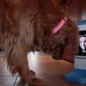 Restez en contact avec votre chien grâce à iCPooch | veille technologique sur la robotique 3A | Scoop.it
