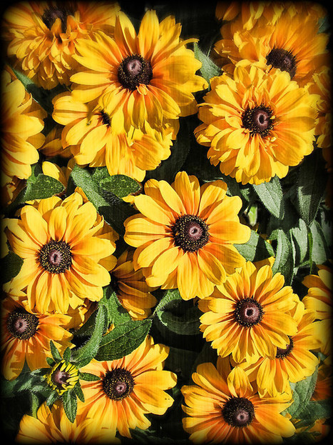 Abundance ~ Yellow Coneflowers / Black-eyed Susans against a Textured Background ~ Vintage Photography by Chantal PhotoPix | Painting | Scoop.it