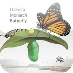 Life of a Monarch Butterfly Reviews | edshelf | HCS Learning Commons Newsletter | Scoop.it