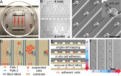 New live-cell printing technology improves on inkjet printing | Amazing Science | Scoop.it