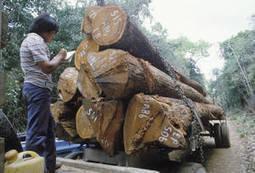 Nouvelles :L'Union européenne et la FAO intensifient leurs efforts pour lutter contre le commerce illégal du bois | Forêt, Bois, Milieux naturels : politique, législation et réglementation | Scoop.it