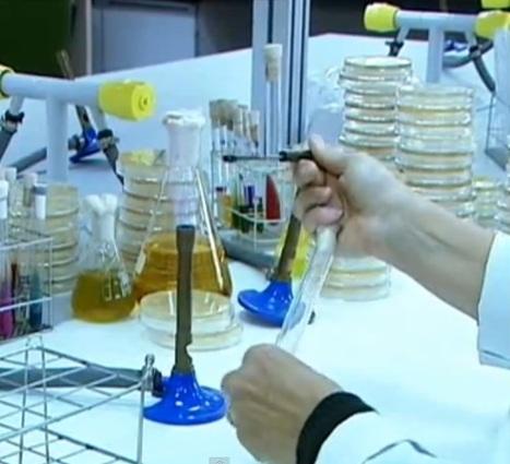 Métodos de Siembra y Aislamiento | Microbiología Básica Aplicada | Scoop.it
