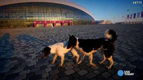 Dogs, Press Conferences, Journalists and the Chaos of Sochi - Jackson Clarion Ledger | Research Capacity-Building in Africa | Scoop.it