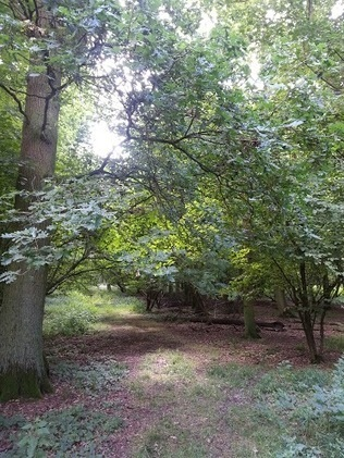 Walks And Walking - Epping Forest Cobbins Brook Walking Route | Walks And Walking | Scoop.it