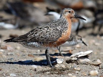 Oiseaux migrateurs et changement climatique | C@fé des Sciences | Scoop.it