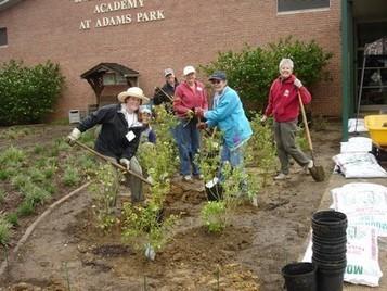 Highbush Blueberry Rain Garden - Chesapeake Ecology Center | A Gathering of Rain Gardens | Scoop.it