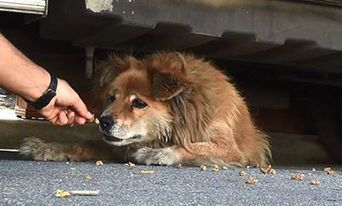 Ann Cluck - The Most Touching Video You'll See All Day:... | Facebook | Dog Traning | Scoop.it