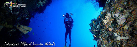 "Indonesia: WAKATOBI National Marine Park: the""Underwater Nirwana"" 