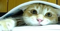 """The IPKat: UK IPO finally speaks about the """"facts"""" of IP post-Brexit 