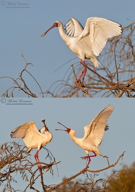 10 Tips for Improving Your Wildlife Photography   My Funny Africa.. Bushwhacker anecdotes   Scoop.it