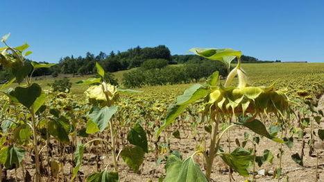 Dordogne : cet été est le plus sec depuis près de 30 ans ! | Agriculture en Dordogne | Scoop.it