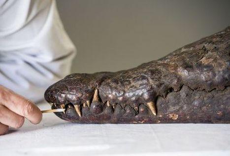 Le Louvre-Lens se penche sur l'importance des animaux dans l'Egypte antique - RTBF Expos   Actualités Afrique   Scoop.it