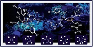 Emergence of diversity and stereochemical outcomes in the biosynthetic pathways of cyclobutane-centered marine alkaloid dimers | Natural Products Chemistry Breaking News | Scoop.it