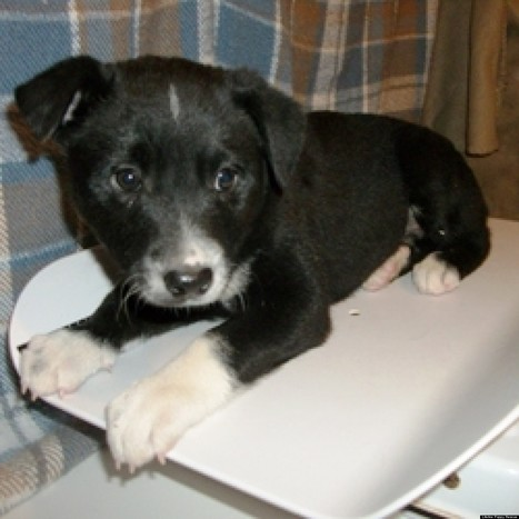 How We Were the Voice for Animals in 2012 | NYC's Animals | Scoop.it