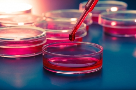 Researchers Make Progress In Search For Mitochondrial Disease Treatment | University of Kent in the News | Scoop.it
