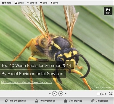 Top 10 Wasp Facts for Summer 2014 (Slideshare)   pest control   Scoop.it