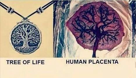 Árbol de la vida y su origen | Evolución Consciente | Scoop.it