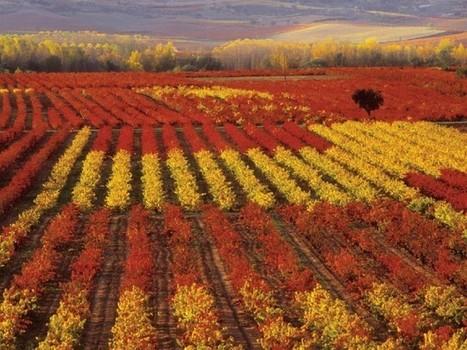 Rioja harvest late but outlook optimistic | Autour du vin | Scoop.it