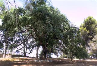 Les arbres de l'année 2011 | Revue de Web par ClC | Scoop.it