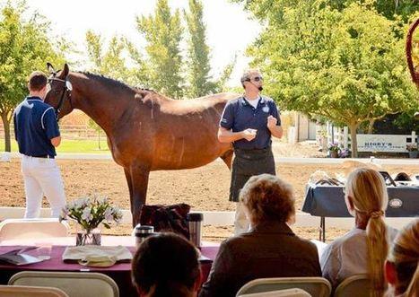Funding call for US equine non-profits - Horsetalk.co.nz | USA Equestrian Trust | Scoop.it