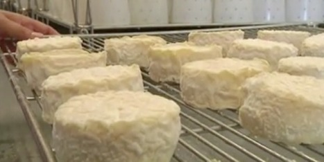 Dans les coulisses du Pélardon, de la fabrication à la dégustation | The Voice of Cheese | Scoop.it