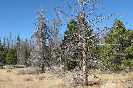 Forests at risk   CALS in the News   Scoop.it
