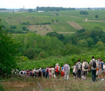 14 Randonnées Vigne Vins rando en Val de loire | inscrivez-vous ! | Vacances en Touraine Val de Loire (37) | Scoop.it
