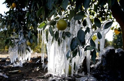 Cold still threatens crops in West but it's easing | KSL (TV-Salt Lake City, UT) | CALS in the News | Scoop.it