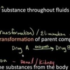 (EN) (VIDEO) - Pharmacokinetics YouTube channel   YouTube   Glossarissimo!   Scoop.it