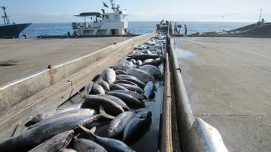 Tesco criticised over tuna brand | Nature conservation | Scoop.it