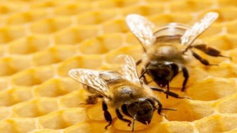 Les néonicotinoïdes menacés par une interdiction totale en Europe | Apiculture, agriculture et environnement | Scoop.it