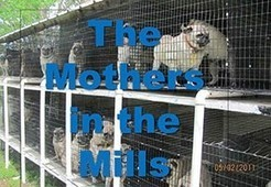 The Puppy Mill Project | Technology Scoops | Scoop.it