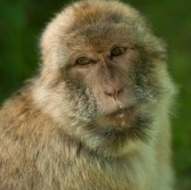 Row over monkey drug testing in Potters Bar | science | Scoop.it