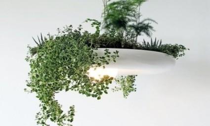 Babylon Light, da lampadario a vaso per piante | fiori e piante, curiosità e notizie | Scoop.it